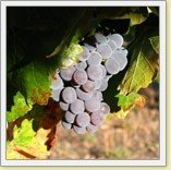 Odonata Wines