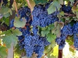 Bonterra Winery