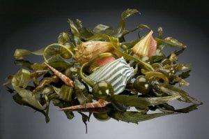 Silkwood Glass