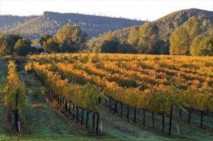 Noggle Vineyards & Winery