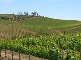 Shannon Ridge Vineyards & Winery