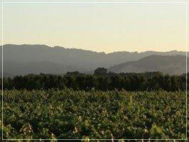 Wildhurst Vineyards